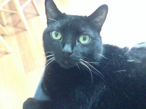 Female adult cat looking for a new home