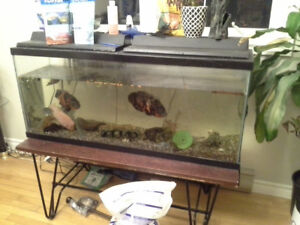75 gallon tank,  stand,  fish and accessories