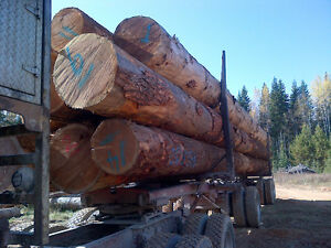 WANTED: Oversize Douglas Fir and Cedar Logs