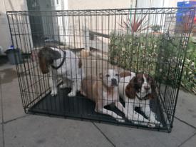 "Xl 42 28 31"" dog crate"