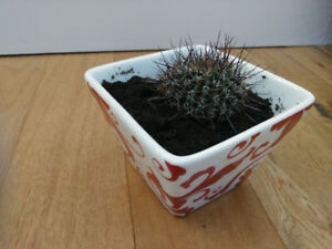 Lovely CACTUS & cute ceramic pot