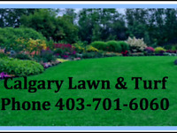 Spring clean up (Aeration starting at $40.00)