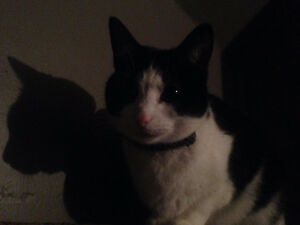 Loving Cat Looking For Home