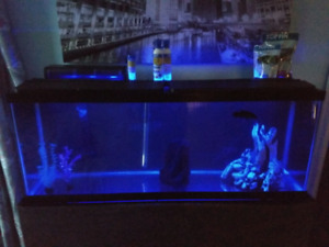 50 gallon tank with stand/ new filter, heater and optibright led