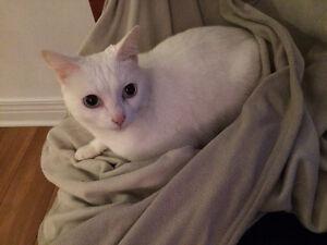 Mon chat chercher un foyer.