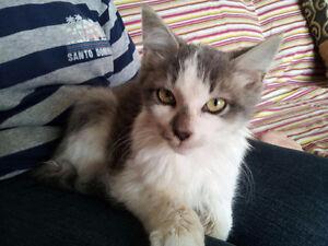 Petit chat adorable et très affectueux À DONNER