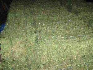 2016 Second Cut Hay Alfalfa