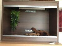 Vivarium for reptiles