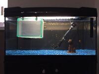 Marina 54 Aquarium Kit & Cabinet