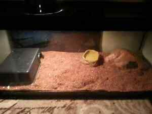 SNAKE  Ball Python BEST OFFER everything included  London Ontario image 4