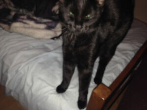 BLACK Kitty very friendly found Johnstown Ontario north channel