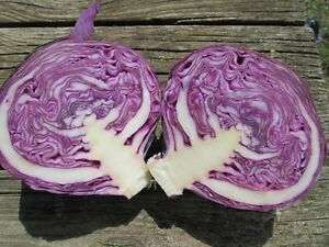 ORGANIC VEGETABLE  CABBAGE RED EXPRESS  2.0GM ~  600 SEEDS