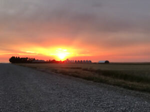 Farm Land for Tender - Nobleford, AB