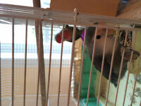 2 lovebirds with cage and nesting box