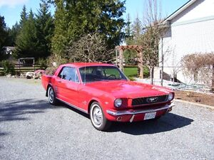 colector plate 1966 mustang  coupe