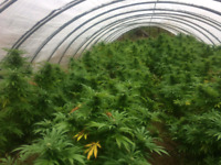 Grow your own Marijuana or let us do it for you.