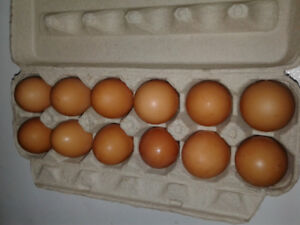 freshly laid brown eggs for sale