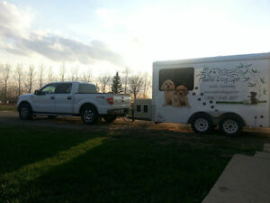 Mobile Dog Grooming Regina Regina Area image 2