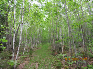 Waterfront Land For Sale on Lake Mulgrave