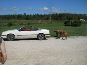 1985 Chevrolet Cavalier Convertible- PRE-WINTER OFFER