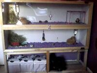 Ferret/Guinea pig/Rat/Bunny Cage!
