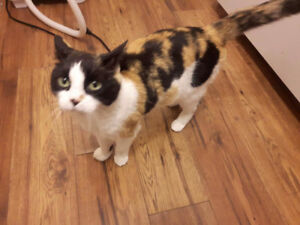 FREE good mouser beautiful calico cat perfect for an acreage