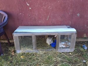2 female rabbits with cage