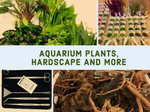 Live Aquarium Plants Available Online