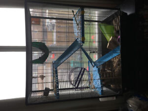 Large rat cage with accessories and two dumbo rats