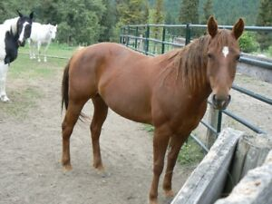 Rehoming mare