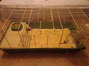 2 Guinea Pigs & Cage  **sold ppu**