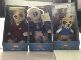 Meerkats for sale