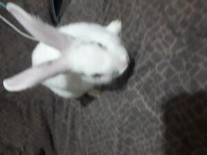 Dwarf baby bunny's