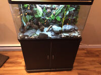 Gorgeous 35 Gallon High End, AquaGiant Aquarium Combo