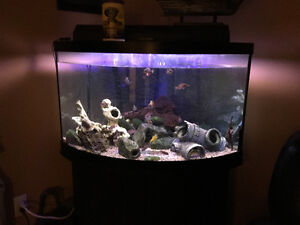 50G Bow front Tank