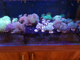 Corals for rehoming