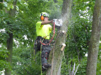 Barrie & Region Top Tree Service - NO HST - Save Big !