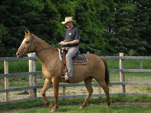Horseback Riding Lessons Fall Program in North Oshawa
