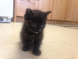 Two kittens for new home
