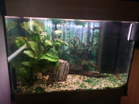 Aqua One 120l Aquarium/ Fish tank & Set-up