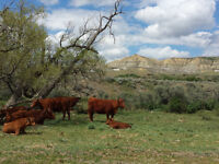 Cattle Ranch Worker Wanted