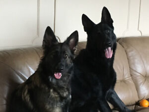 PRIVATE DOG WALKING AND TRAINING SERVICES