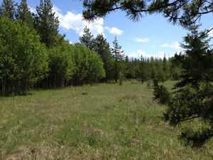 5 ACRE LOT VENDOR FINANCING AND ONLY $35,900 Prince George British Columbia image 4