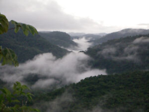 Buy an affordable Rainforest Lot in Tropical Belize