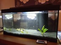 Tetra Fish Tank, Heater, Filter, Air Pump, Plants, Sand Full Set Up, cycled ready to use