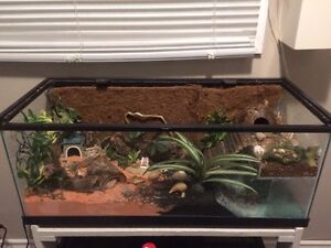 Custom Hermit Crab Tank London Ontario image 1