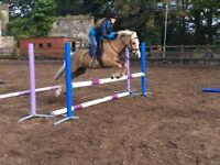 Striking 2nd Pony for Sale