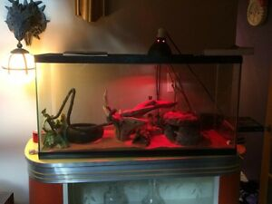 Python Royale avec habitat