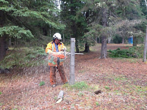 Tree removal and pruning Prince George British Columbia image 4