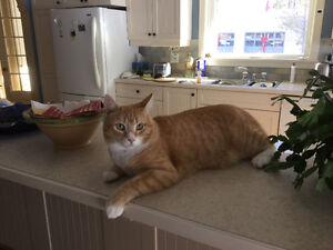 Lost cat from Bushville area,